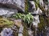 Вертикальные скалы