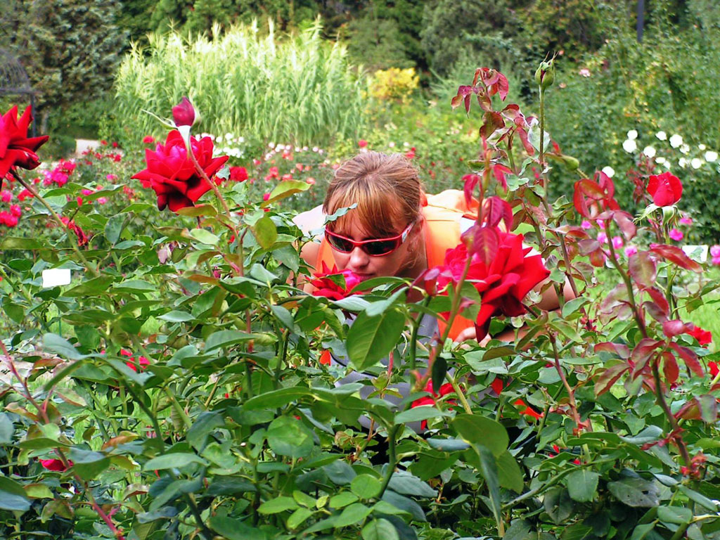 нюхаю розы