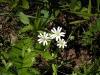 цветы заповедника