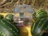 форма для выращивания квадратных арбузов