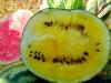желтые арбузы