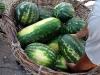 Самые большие арбузы на рынке