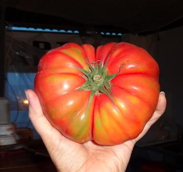 вот такой помидор!