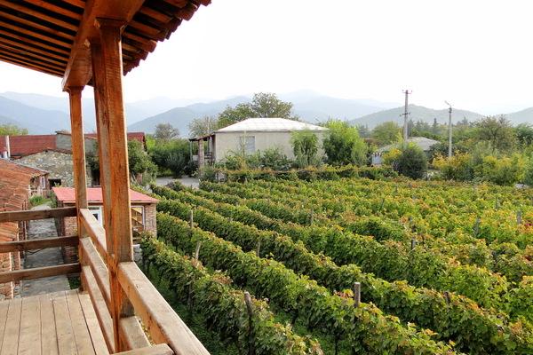 Виноградная лоза сортов «Ркацители» и «Саперави» для этих вин выращивается тут же под окнами гостиницы, которая располагается над погребом.